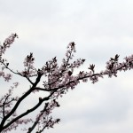 2011_04_15