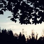 2011_10_14